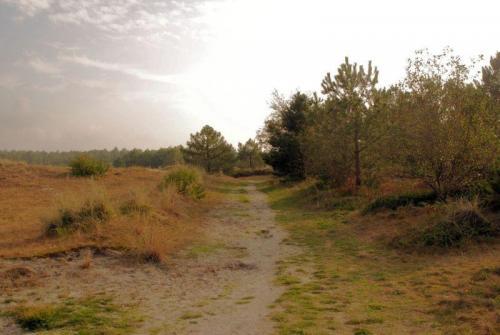 Cees-Bakker-Clubuitje-Struinen-door-de-duinen-2