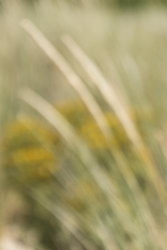 Christiene Krouwels - Onscherpte 1