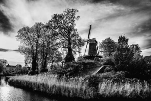 Edward-Ooijevaar-Alkmaar