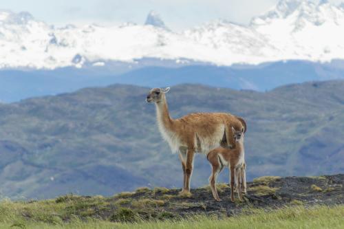 Peter van der Voort - Patagonie - 15